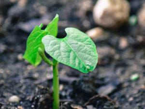 The Best Organic Plant Food - Papa's Perfect Poop Fertilizer