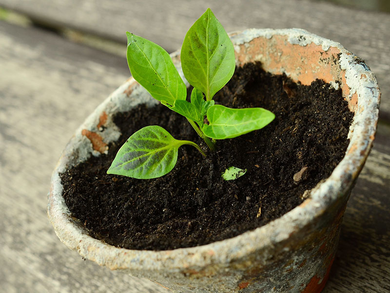 Small Beautiful Plant grown with the Best Organic Fertilizer