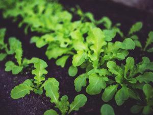 The Best Organic Fertilizer - Grow any Plant