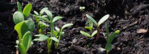 The Best Fertilizer grows the Best Plants