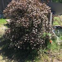 The Best Organic Fertilizer - Tree
