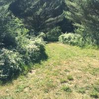 Beautiful Trees grown with Papa's Fertilizer