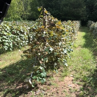 Plants grown with Papa's Perfect Poop Fertilizer